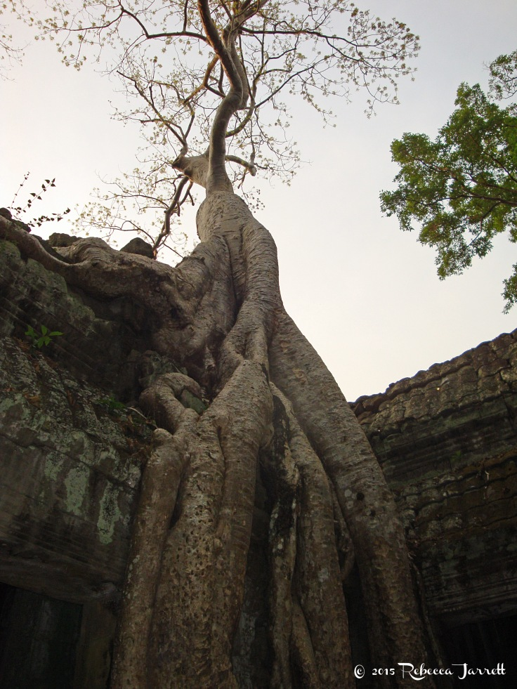 TaProhm_tree_cambodia_travel