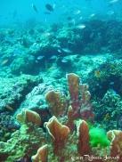 SimilanIslands_Dive_CoralReef_Thailand
