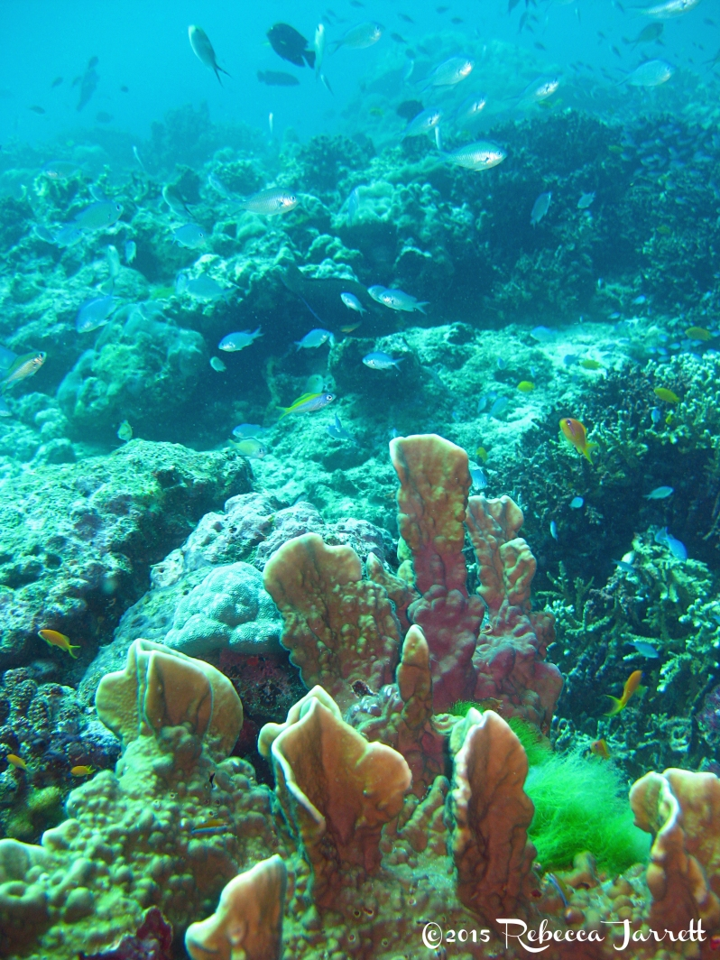 SimilanIslands_Dive_CoralReef_Thailand