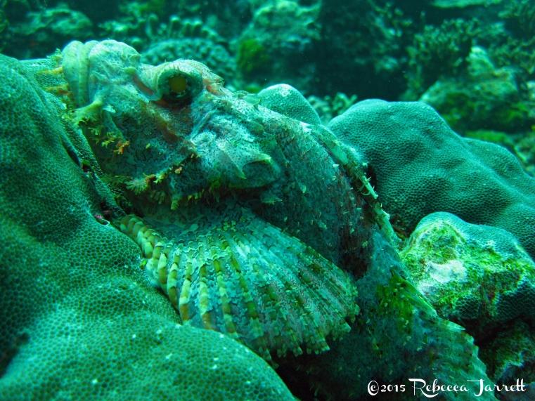 ScorpionFish_divingsimilanislands_thailand