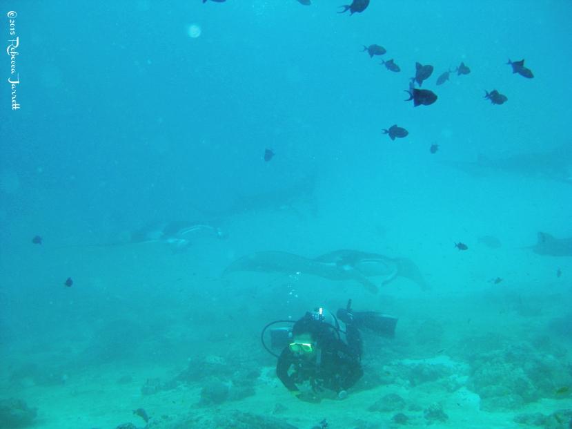 divingwithmantarays_maldives_thepersephoneperspective_travelblog1