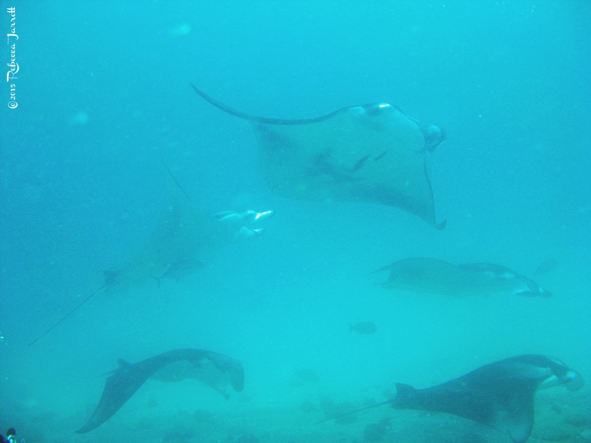 divingwithmantarays_maldives_thepersephoneperspective_travelblog2