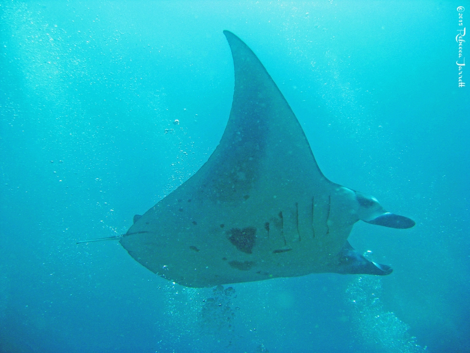 divingwithmantarays_maldives_thepersephoneperspective_travelblog3