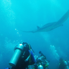 Bucket List Inspiration: Diving with Mantas in the Maldives