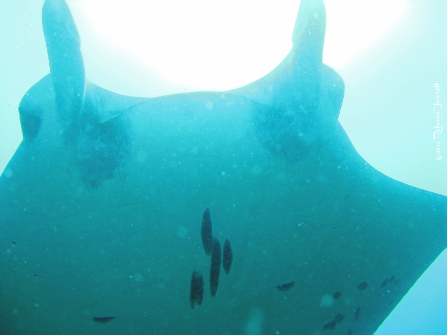 divingwithmantarays_maldives_thepersephoneperspective_travelblog5