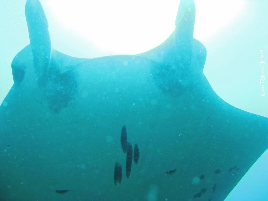 divingwithmantarays_maldives_thepersephoneperspective_travelblog5