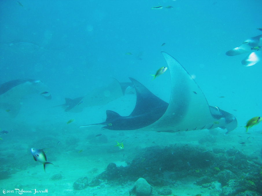 divingwithmantarays_maldives_thepersephoneperspective_travelblog6