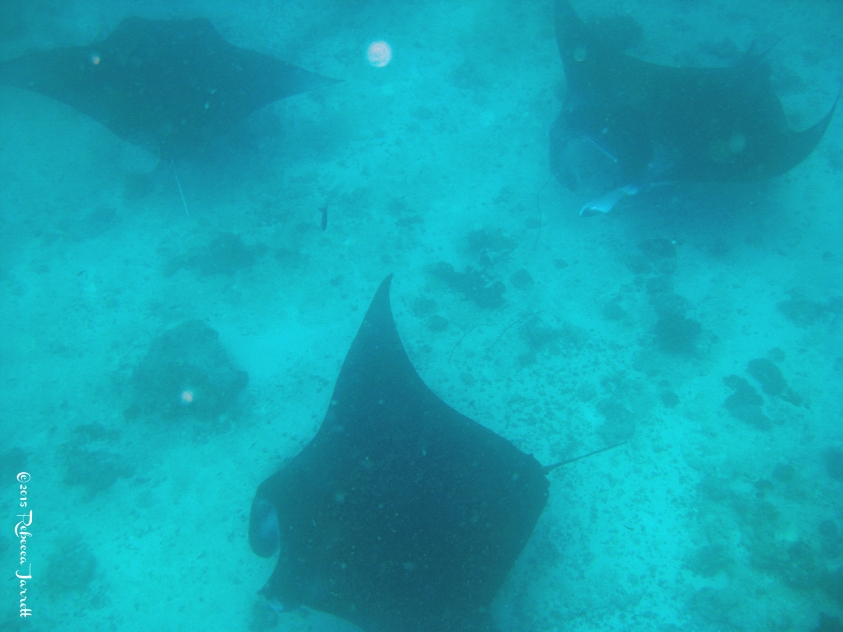 divingwithmantarays_maldives_thepersephoneperspective_travelblog9