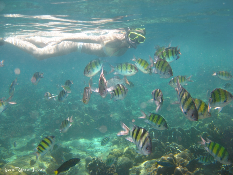 SnorkelPhiPhiIslands_thailand_phuket_thepersephoneperspective